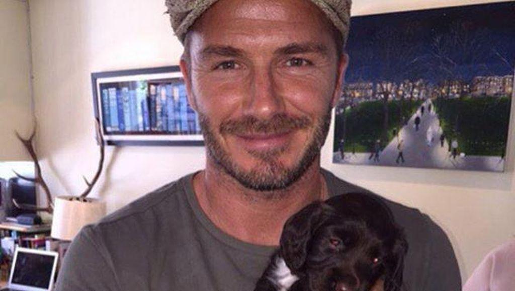 Berapa Bayaran Pelatih Anjing David Beckham?