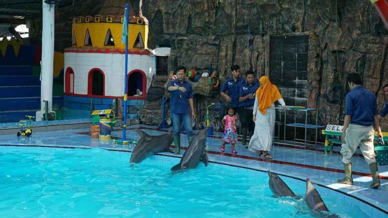 Lumba-lumba lucu di Pantai Cahaya Kendal (Masaul/detikTravel)