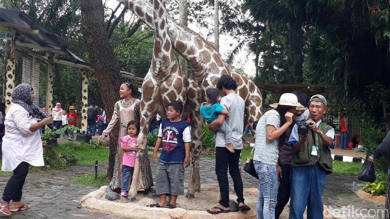 Manfaat berkunjung ke kebun binatang (Foto: Dwi Andayani/detikcom)