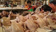Dolar AS Ngamuk, Harga Ayam Bisa Naik