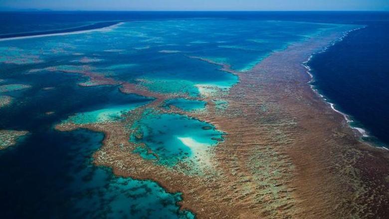 UNESCO Tidak Anggap Great Barrier Reef Terancam