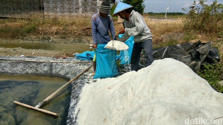 Susi: Petani Senang Harga Garam Tinggi Hingga Bisa Beli Truk