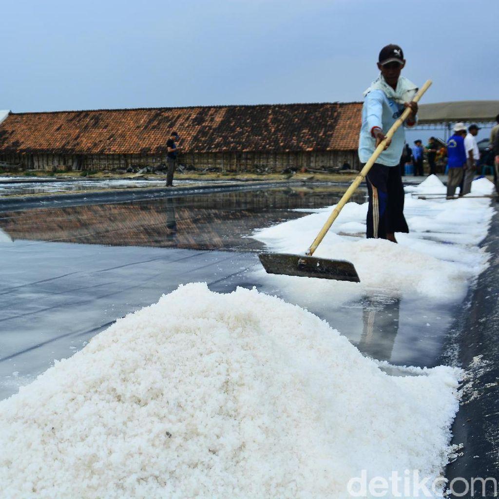 Pemerintah Jamin Garam Impor Tak akan Rembes ke Pasar
