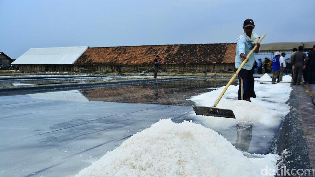 Pasokannya Langka, Begini Kondisi Produksi Garam di RI