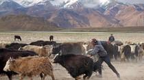 Mereka yang Hidup di Atap Dunia Tajikistan