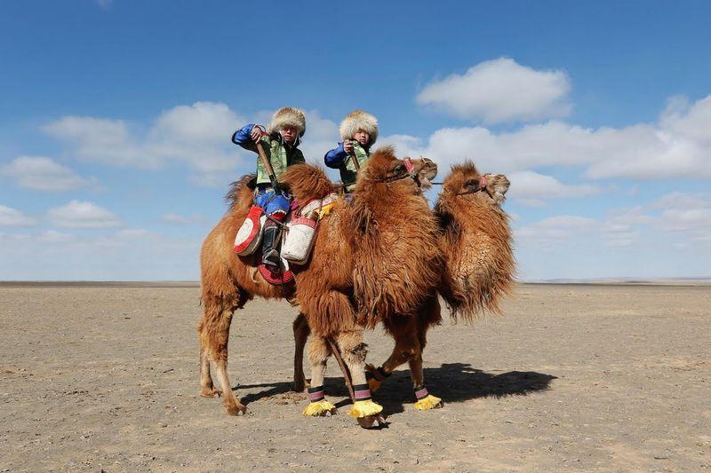 Lomba balapan unta yang bernama Festival Unta Mongolia ini diadakan pada tahun lalu di Gurun Gobi, tepatnya di Kota Dalanzadgad, Mongolia. Pesertanya sekitar 1.108 unta! (Reuters)