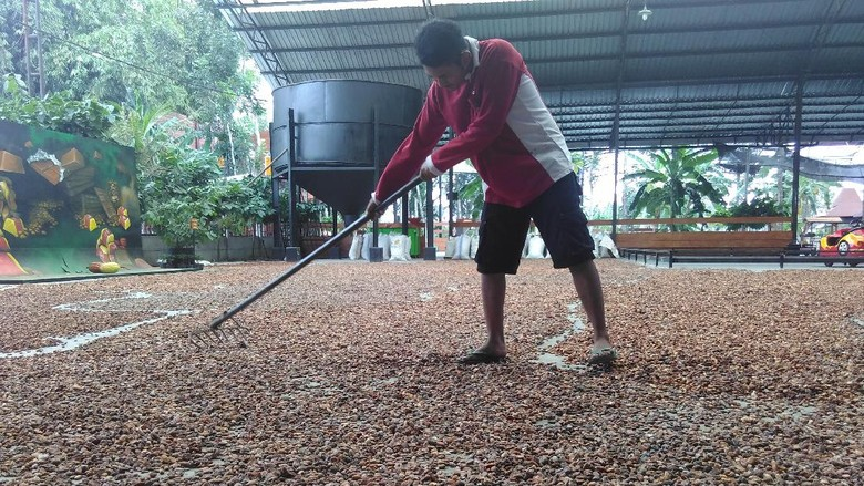 Produksi Kakao RI 400.000 Ton/Tahun, Cukupkah untuk Industri?