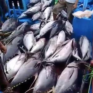 3 Tahun Illegal Fishing Diberantas, Potensi Ikan di Natuna Melejit