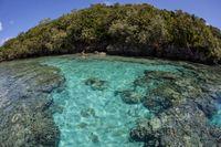 Alam laut Micronesia (Thinkstock)