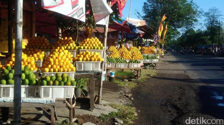 Penjual Mangga Podang Menjamur di Kediri