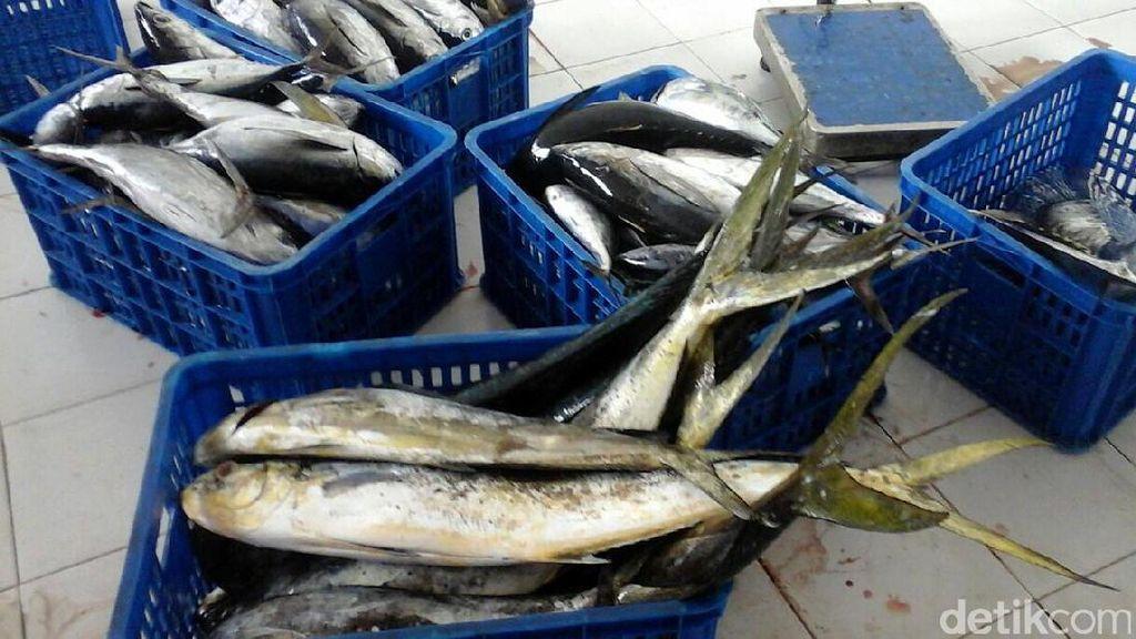Foto: Susi Speechless Lihat Nelayan Tangkap Tuna Sebesar Anak Bocah