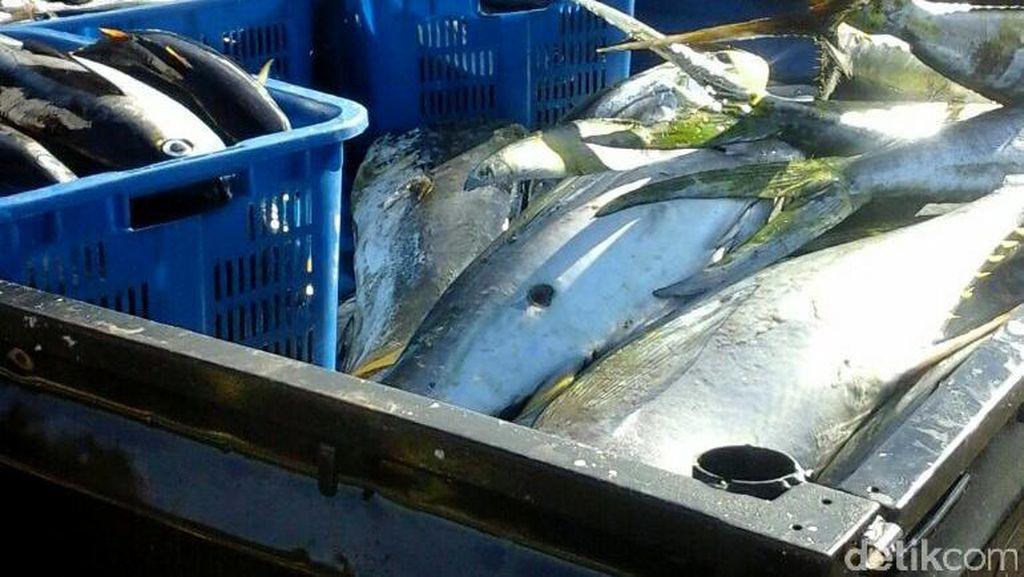 Ongkos Angkut Ikan dari Merauke Rp 4.300/Kg, dari China Rp 1.200/Kg