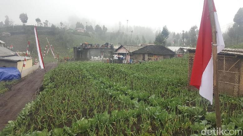 Desa Ranupani (Aminudin/detikTravel)