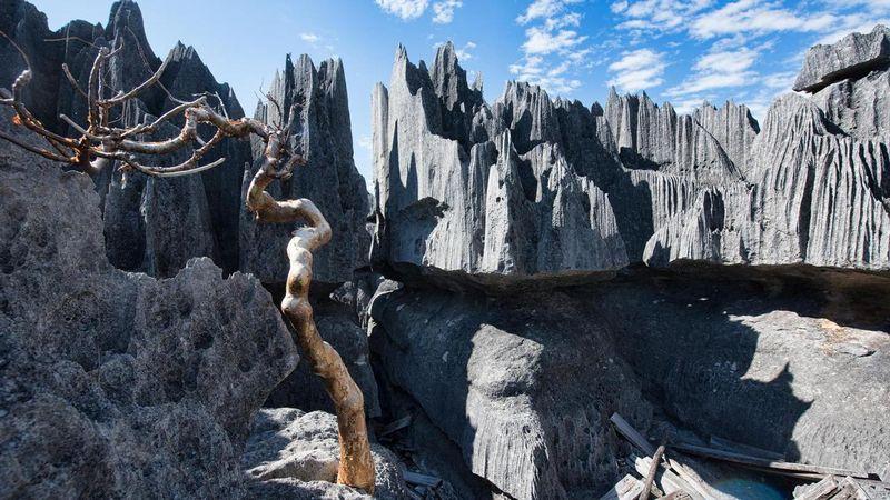 Taman Nasional Tsingy de Bemaraha merupakan tebing bergerigi situs warisan dunia yang sudah ditetapkan oleh UNESCO. Terletak di Madagaskar, tepatnya Distrik Antsalova (Dave Stamboulis/BBC)