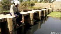 Ratusan Hektar Sawah Terancam Pencemaran Sungai Pecangaan Jepara