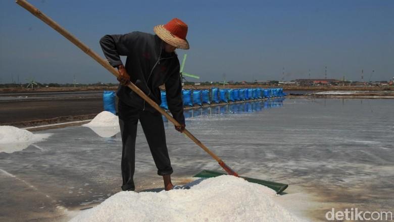 Luhut: 2020 RI Tidak Impor Garam Lagi