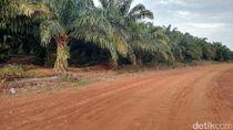 Eksekusi Kebun Sawit Milik PTPN Seluas 2.800 Hektare Pekan Depan