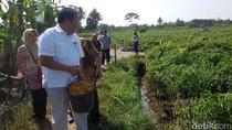 Pejabat Kementan Kaget Tahu Harga Cabai Sebenarnya dari Petani