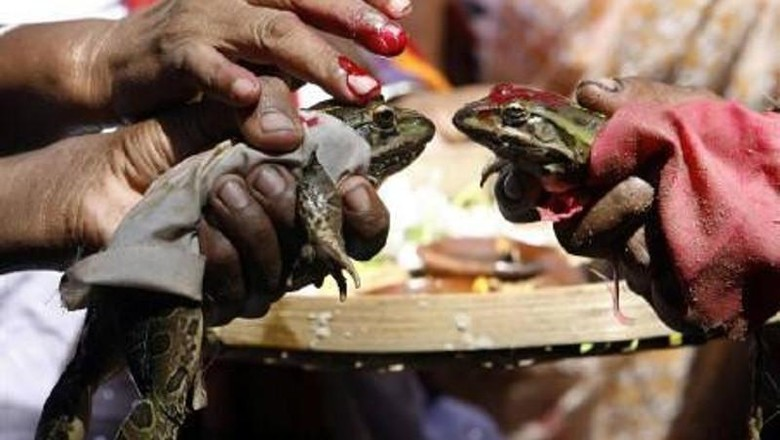Tradisi pernikahan katak yang unik di India (Reuters)