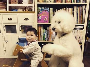 Mame naik kuda-kudaan, si anjing pudel deh yang mengayun-ayun. (Foto: Instagram/ @tamanegi.qoo.riku)