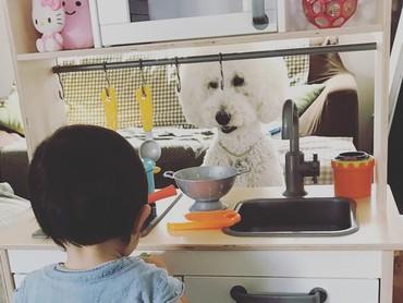 Begini jadinya kalau anjing peliharaan diajak main, bisa jadi pembeli dagangan, Bun. (Foto: Instagram/ @tamanegi.qoo.riku)