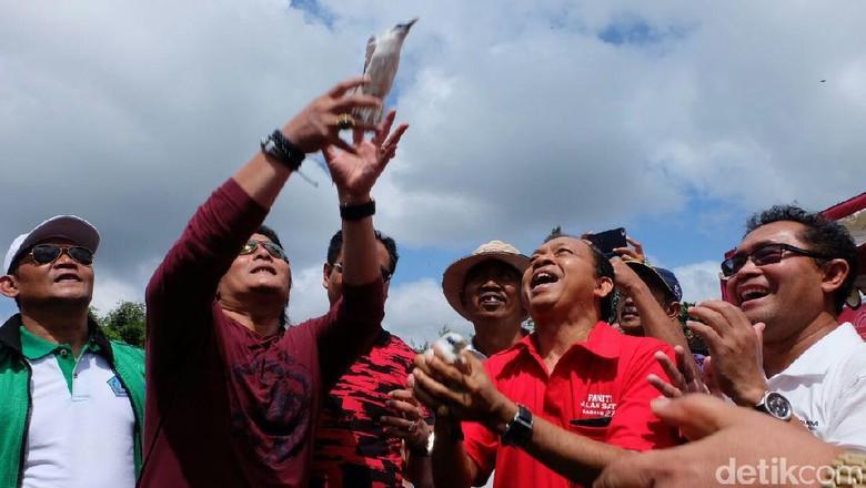 Jaga Ekosistem, Pertamina Lepasliarkan Jalak Bali