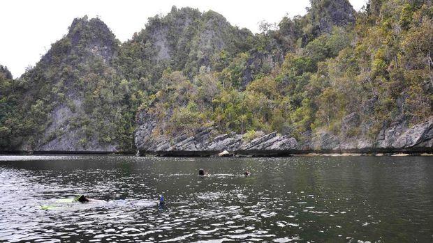 Ubur-ubur Tak Menyengat di Indonesia, Ada di 3 Tempat Ini