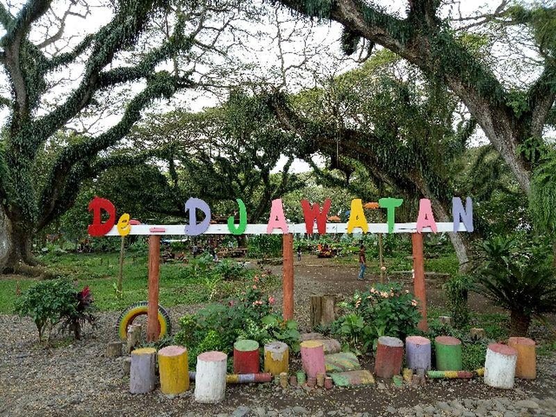 Foto: De Djawatan berada di Desa Benculuk, Kecamatan Cluring, Banyuwangi. Objek wisata ini menawarkan sensasi hutan seperti dalam film Lord of The Rings (Ardian Fanani/detikTravel)