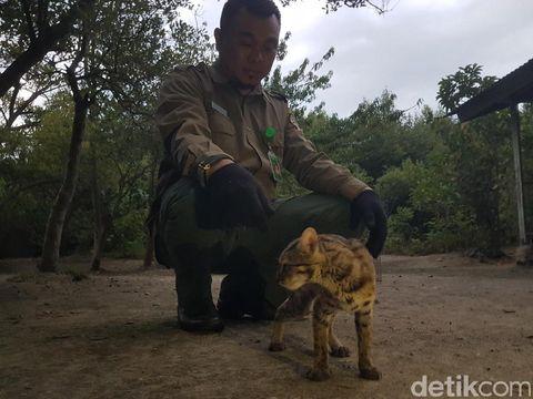 Kucing ini didapat dari seorang warga di Rangkasbitung