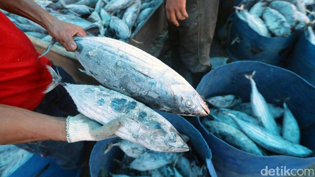 Bakal Kelola Pasar Ikan Modern, Dirut Perindo Belajar Sampai ke Jepang dan Korea
