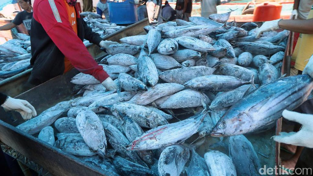 22 Ton Ikan Impor Ilegal Gagal Masuk RI