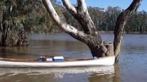 Koala yang Diselamatkan dari Banjir Jadi Viral
