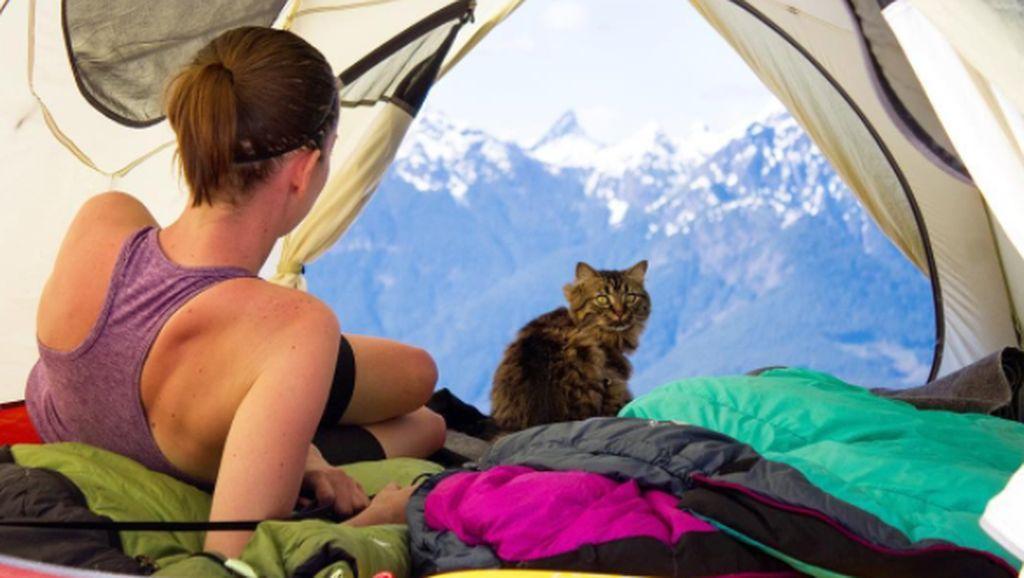 Petualangan Kucing Selebgram Ini Bikin Iri Sesama Kucing
