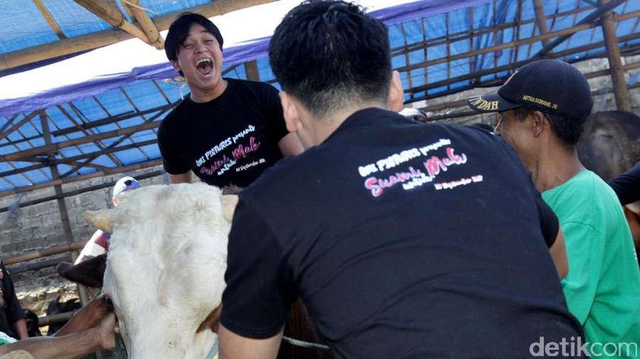 Naik Sapi 1 Ton, Billy Syahputra Girang Banget