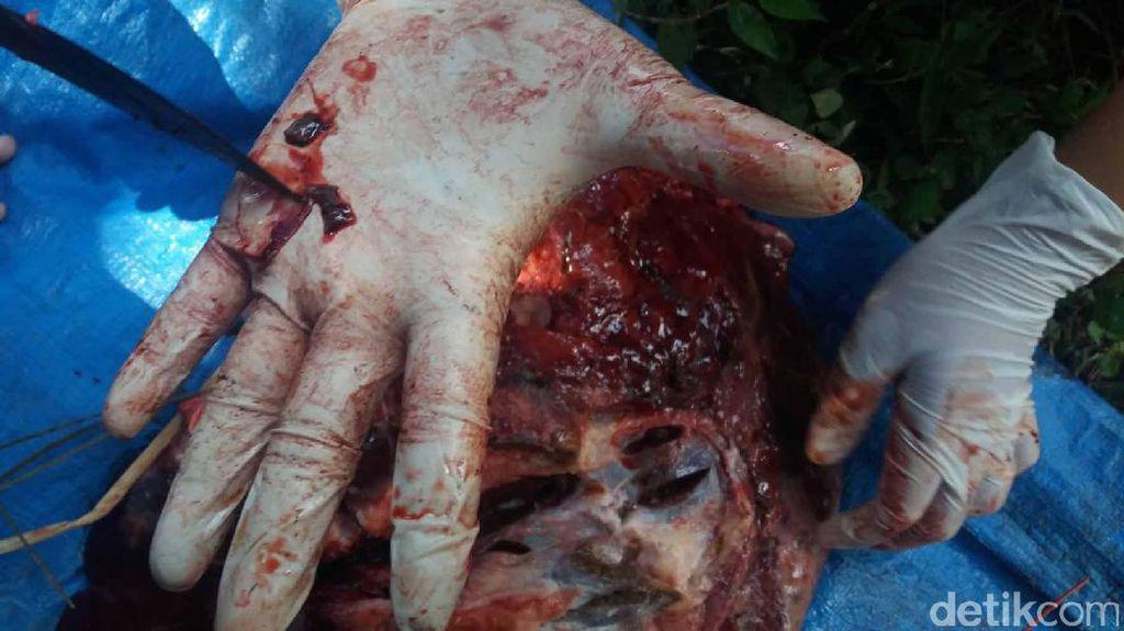 Hewan Kurban Terinfeksi Cacing dan TB, Amankah Dagingnya Dikonsumsi?