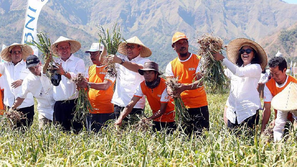 BNI Kucurkan KUR ke Petani Bawang Putih di Lombok