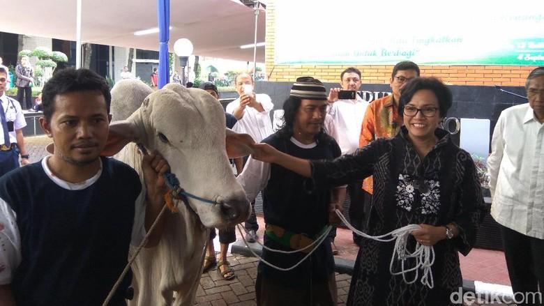 Sri Mulyani Berkurban Sapi Brahman Seberat 780 Kg