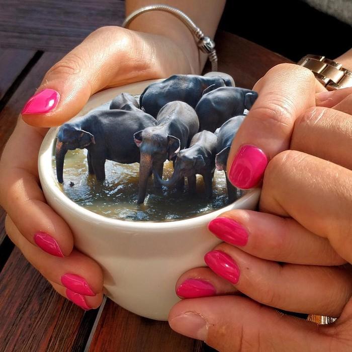 Di dalam cangkir keramik ini masa bisa berisi air berwarna cokelat, dengan beberapa gajah di dalamnya. Foto: The Johnny Smith