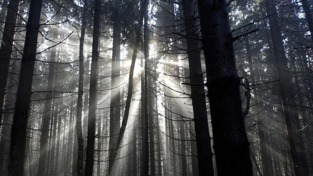 Foto: Penampakan Hutan Hitam Menyeramkan