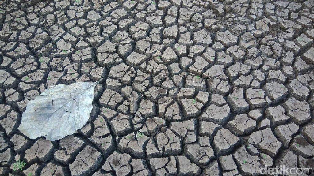 Potret Kekeringan Gunungkidul: Tanah Merekah dan Daun Meranggas
