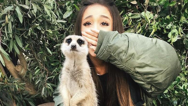 Ariana Grande saat foto bareng meerkat (arianagrande/Instagram)