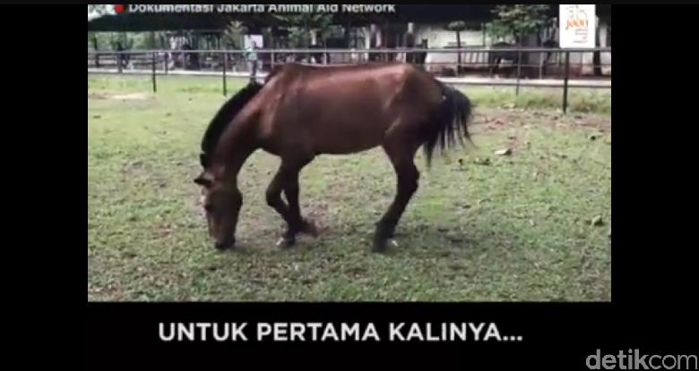 Happy Ending! Begini Kabar Kuda yang Pernah Dicambuk Meski Lelah
