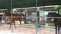 Rumah baru kuda Chester /