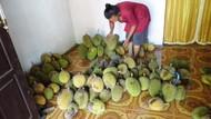 Pesta Durian di Klaten