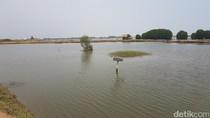 Kasihan, Tambak Ikan di Serang Tercemar Limbah Sungai Ciujung