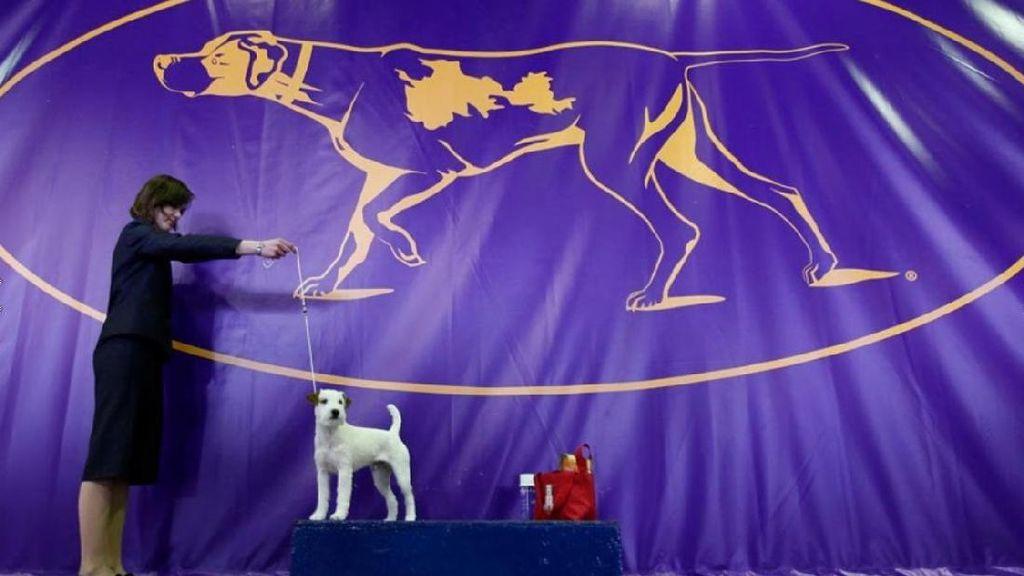 Kompetisi Khusus Anjing, Lucu Abis!