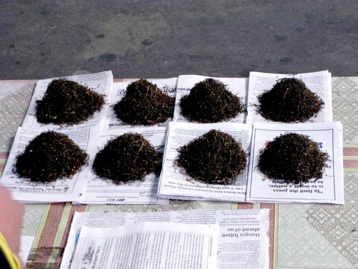 Palolo adalah cacing kecil yang hidup di terumbu karang di pantai Samoa, Pasifik. Penduduk setempat mengambilnya untuk dijadikan makanan dengan cara ditumis ataupun dengan cara yang lain.
