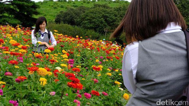Turis lokal foto-foto di kebun bunga ini (Rachman/detikTravel)