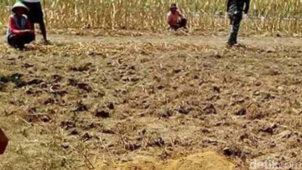 Ladang jagung tempat jatuhnya mortir
