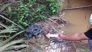 Pengusaha Nilam Asal Tangerang Ditemukan Tewas di Aceh